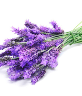 lavender-570x450