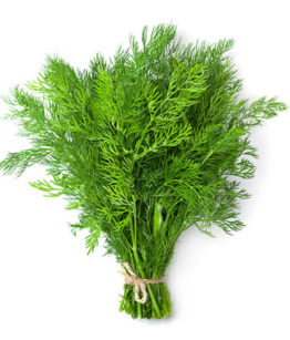 wild-anthos-dill-570x450